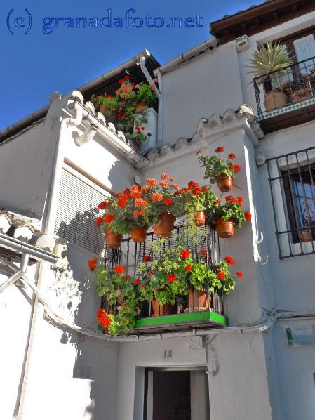 Albayzin  - geraniums