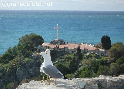 Almuñécar (4) - seagulls