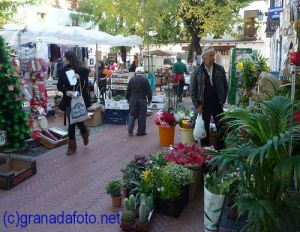 Flower shop - Plaza Larga