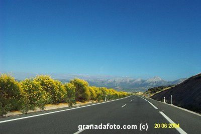 Yellow Flowers on the Motorway in Granada