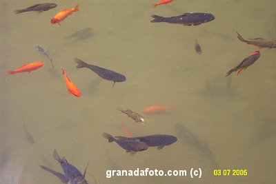 Alhambra fish