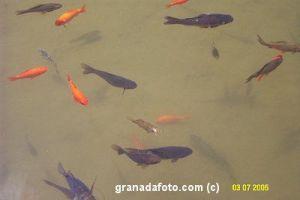 Fische in der Alhambra