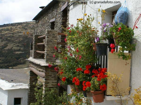 Alpujarras Flowers